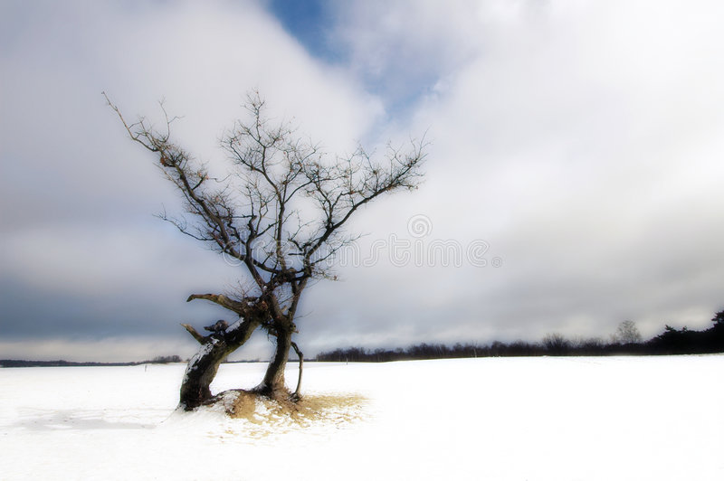 Tree in landscape royalty free stock image