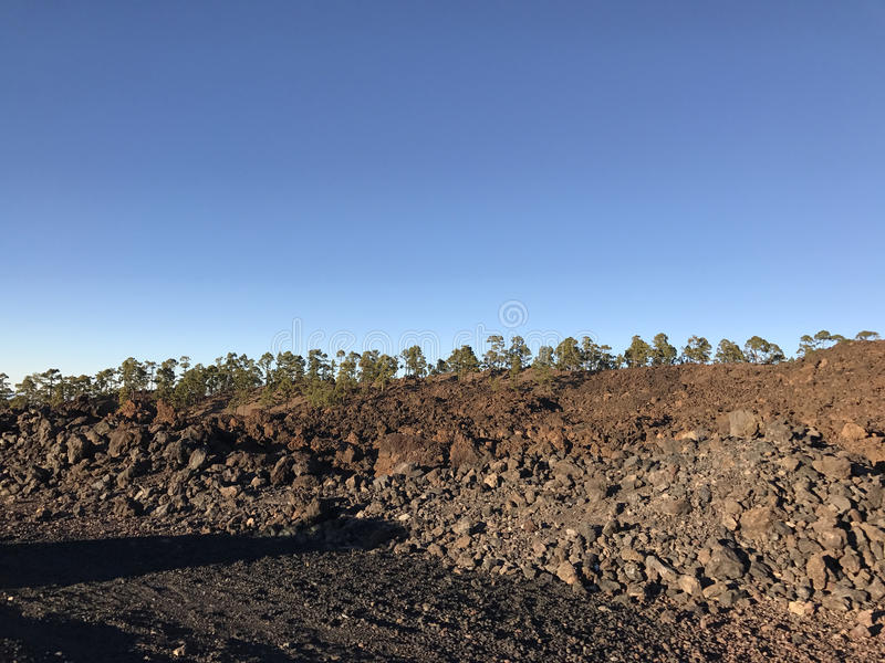 Tree landscape. At Teide National Park in Tenerife the Canary Islands royalty free stock images