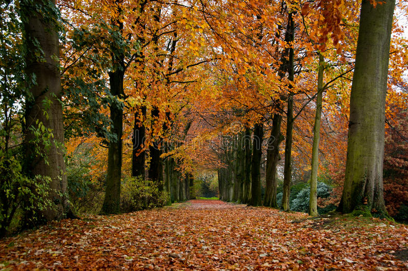 Download Tree lane stock image. Image of green, branches, path - 24834267