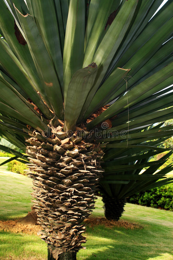 Download Tree and lawn stock image. Image of outdoors, green, sisal - 15588637