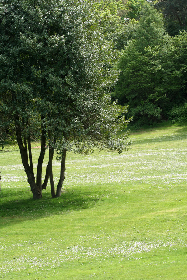 Tree and lawn stock images