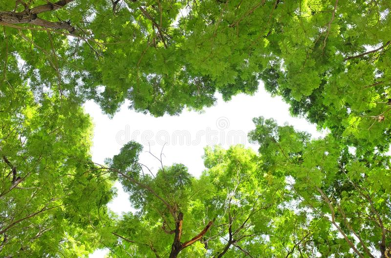 Tree leaf and branches in the garden against sky background.  royalty free stock images