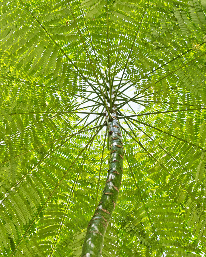 Download Tree and leaf canopy stock image. Image of branch, twigs - 23496033