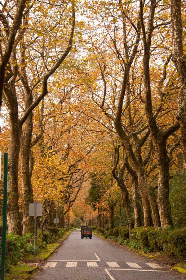 Tree, Leaf, Nature, Autumn royalty free stock photos