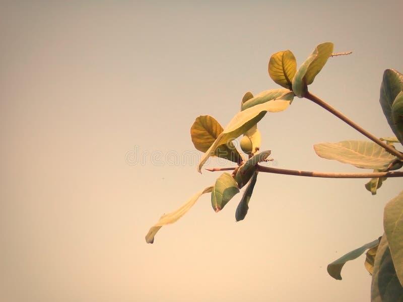 Tree leaf stock image