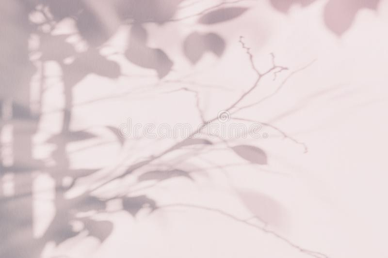 Tree leaf shadow on light wall. Pink purple abstract background stock photography