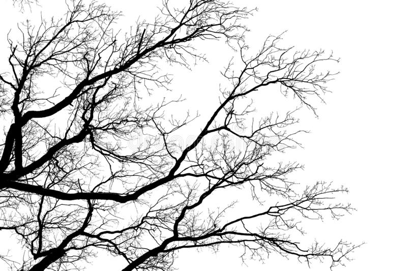 Tree leafless branches, black silhouette of old oak tree crown on white clear sky background, bare tree branches texture royalty free stock images