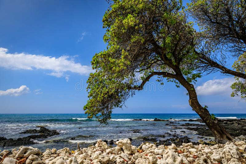 A tree leans over white coral towards the ocean on a briliant bl royalty free stock photography