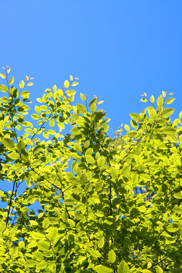 Free Tree Leaves And Sky Stock Photos - 5324523