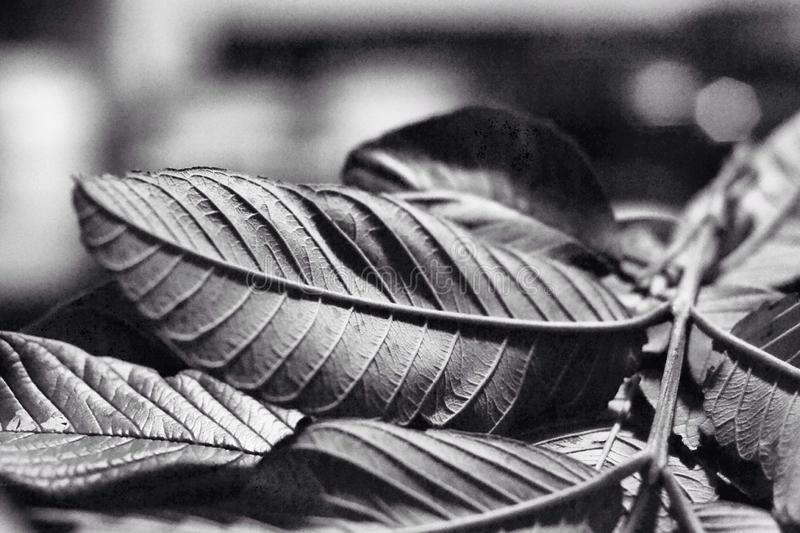 Tree leaves without color stock photos