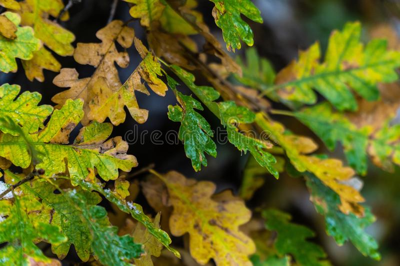Tree and leaves during fall autumn after rain royalty free stock photos
