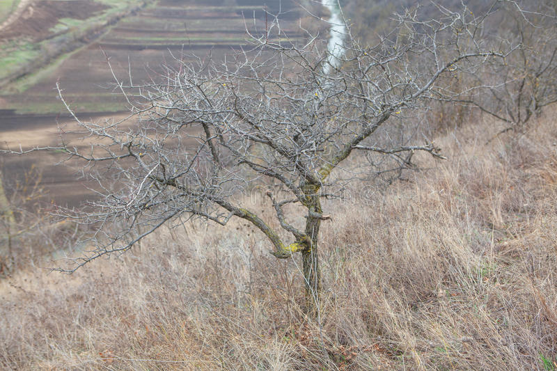 Tree without leaves. Late autumn landscape with empty tree stock photos