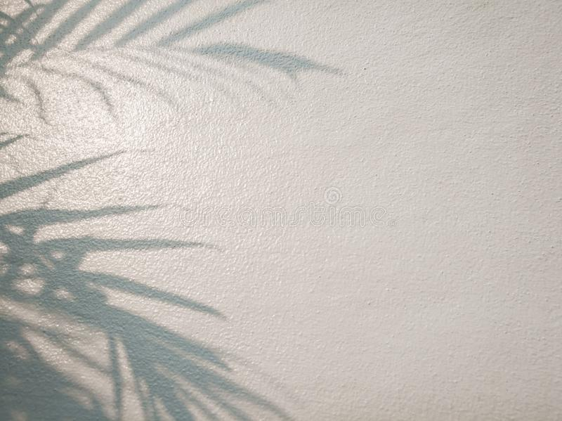 Tree leaves shadow on wall background, Abstract Background Cement Wall Shadow Light Concept royalty free stock photos