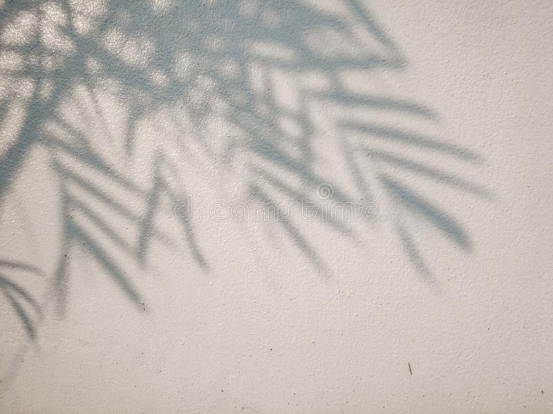 Tree leaves shadow on wall background, Abstract Background Cement Wall Shadow Light Concept stock image