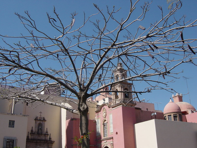 Tree in Leon stock photography