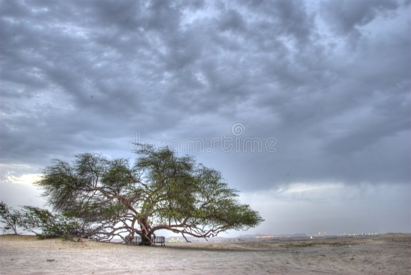 Tree of Life royalty free stock image