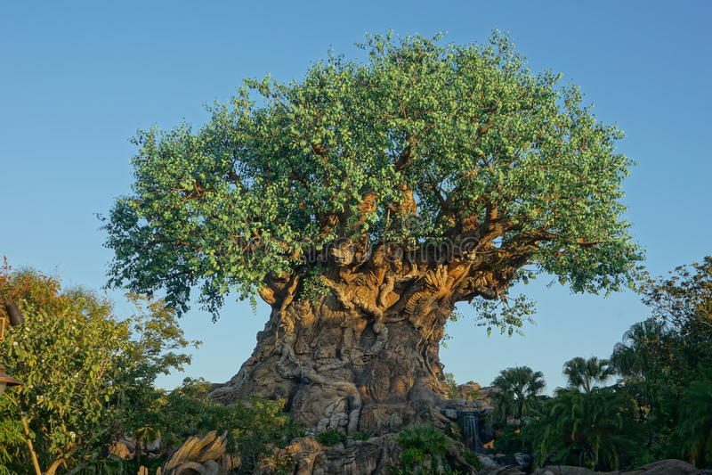 Tree of Life - Disney Animal Kingdom. View of tree of life in Disney's Animal Kingdom, Orlando Florida royalty free stock photo