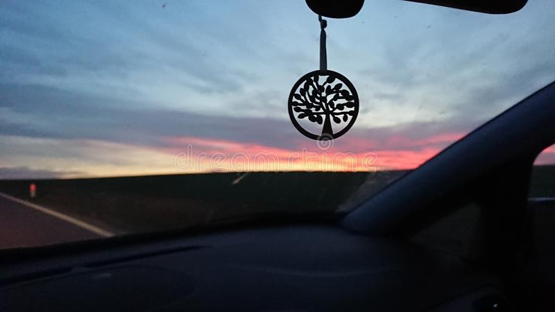 Tree of life before sunset in a car stock photos