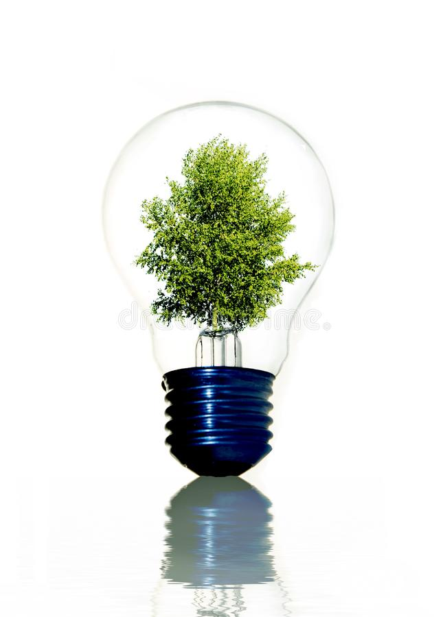 Tree in light bulb stock photo