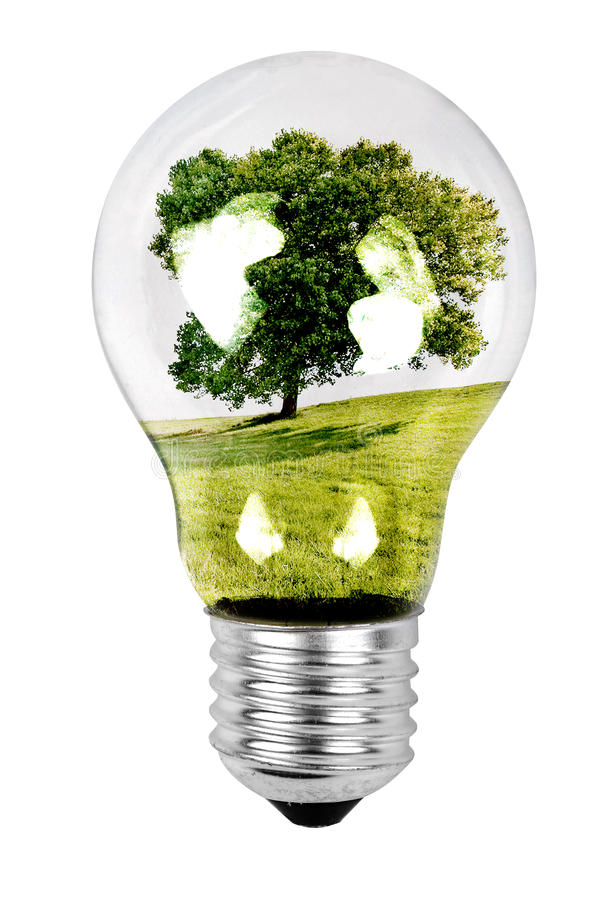 Tree in a Light Bulb stock image