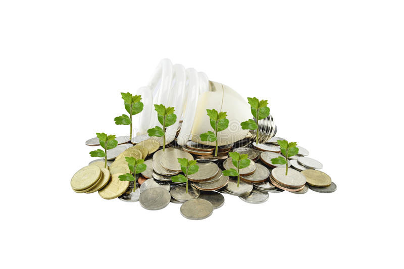 Tree and light bulb on coins heap (energy savings concept) on white background. With clipping paths royalty free stock photos