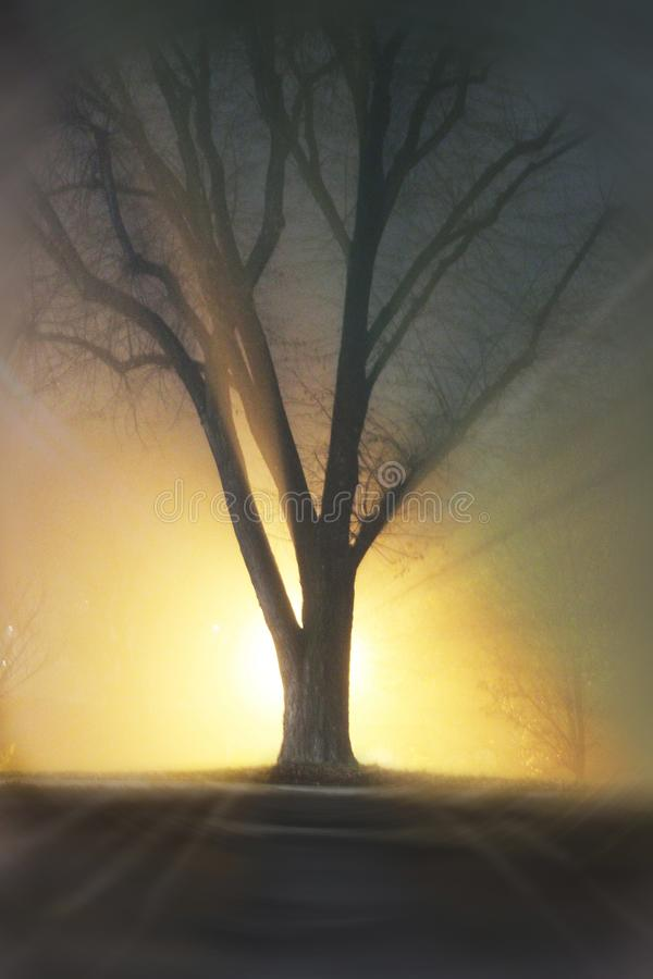 Tree in evening time. Tree and light in the evening time stock photo