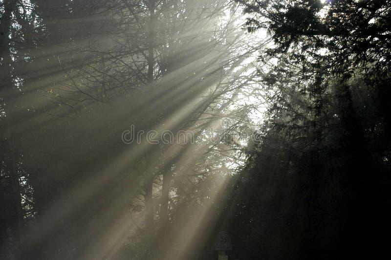 Tree light II stock image