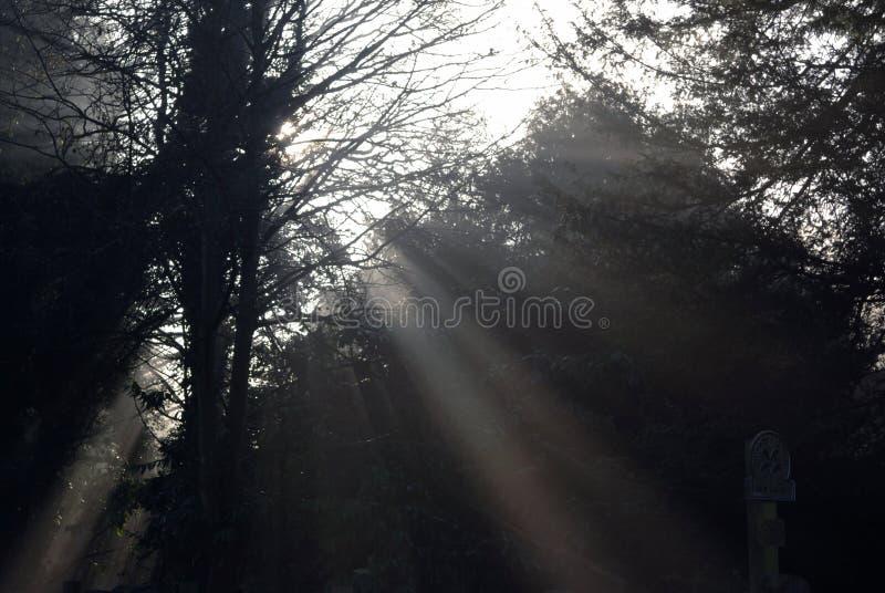 Tree light III stock photo