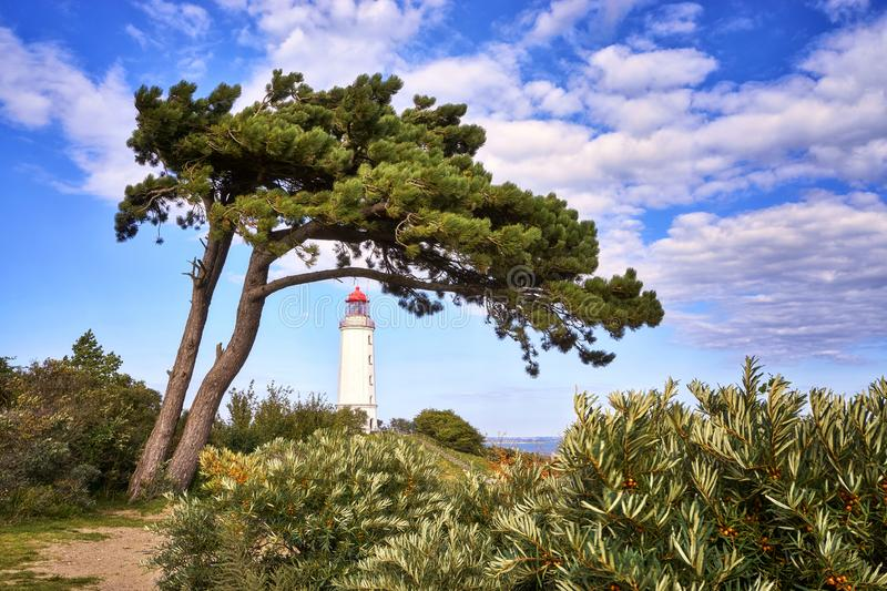 Tree at the lighthouse on the island Hiddensee. Architecture, background, baltic, baum, leuchtturm, beautiful, building, coast, dornbusch, ancient, europe stock photo