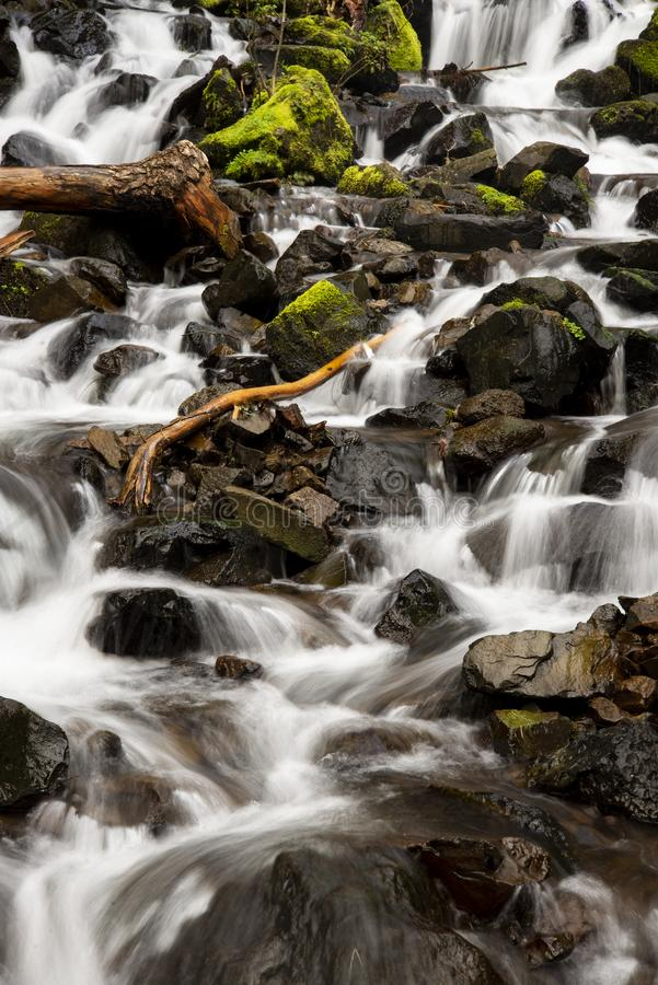 A tree limb rubbed smooth sitting in a flowing creek. stock image