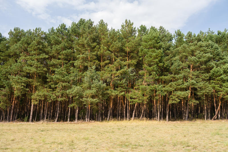 Tree line royalty free stock photos