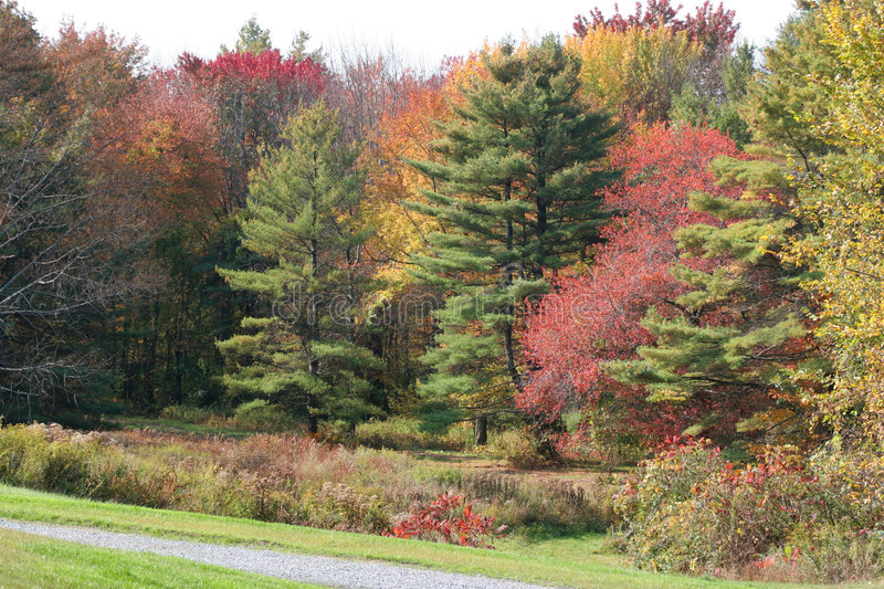 Tree Line Of Fall Colors Royalty Free Stock Photos