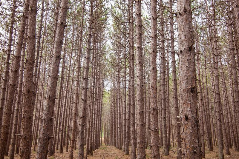 Tree line stock images