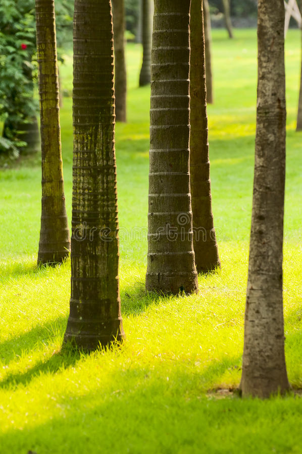 Tree-lined stock fotografie