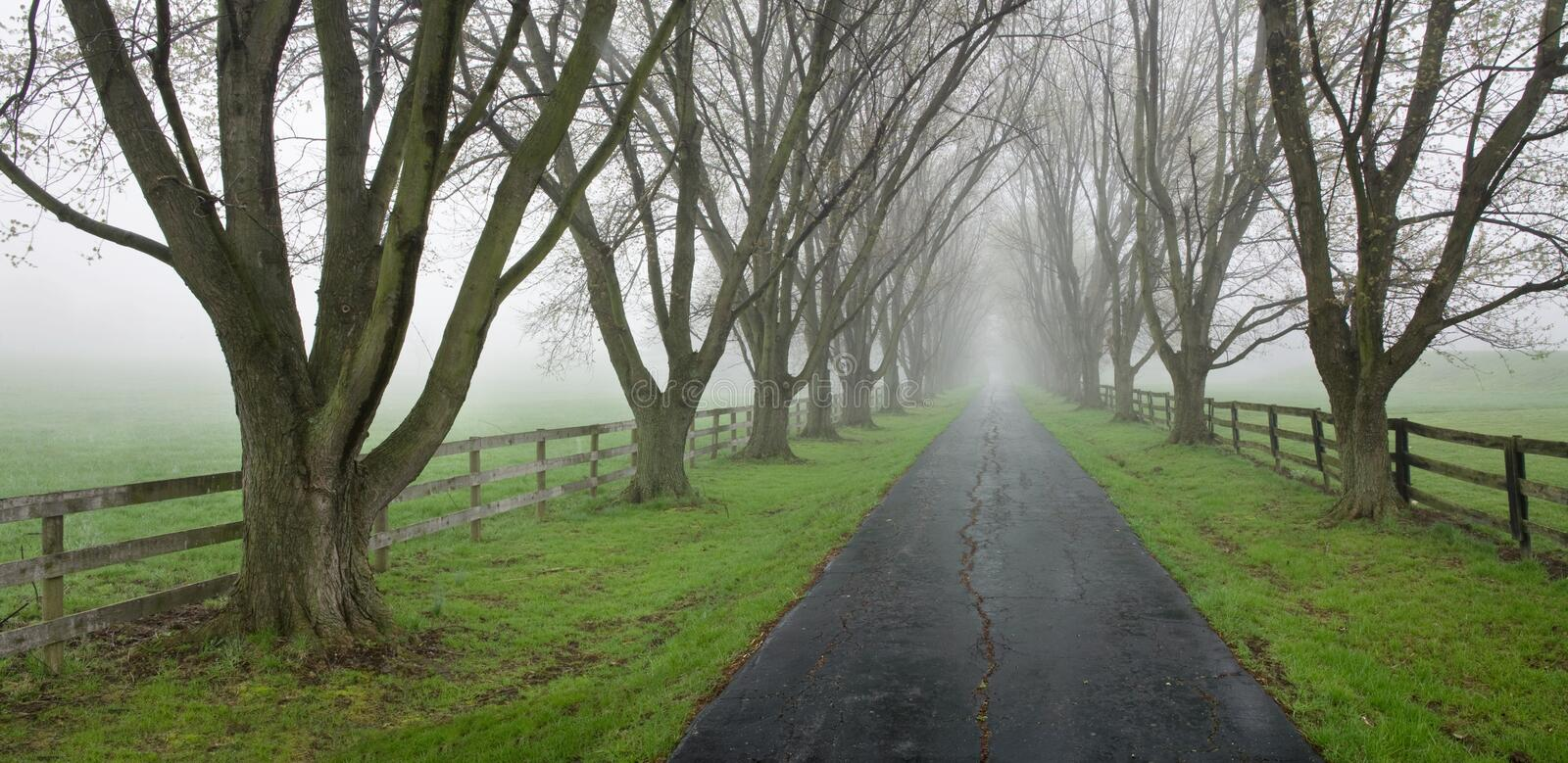 Download Tree Lined Country Lane stock image. Image of mist, scenic - 15297597