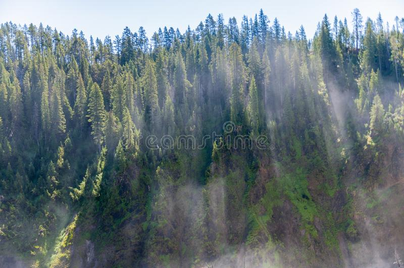 A Tree-lined egde of the lower Grand Canyon of Yellowstone. Water vapour illuminated by early morning sunlight, as passing trough the trees. Lower Canyon of the royalty free stock photos