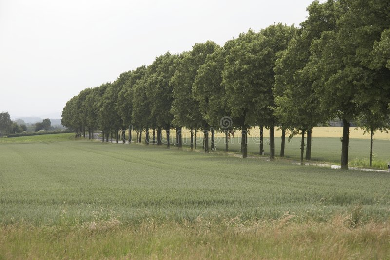 Tree-lined gang stock fotografie