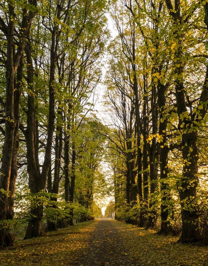 Tree-lined grintweg op een zonnige de herfstdag royalty-vrije stock fotografie