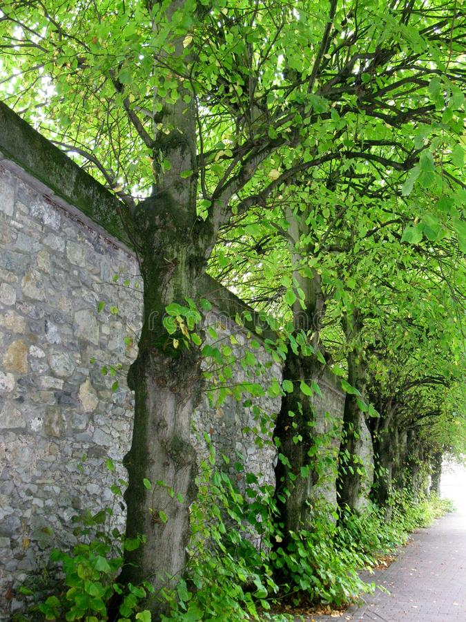 Tree-lined muur in Ierland stock foto's