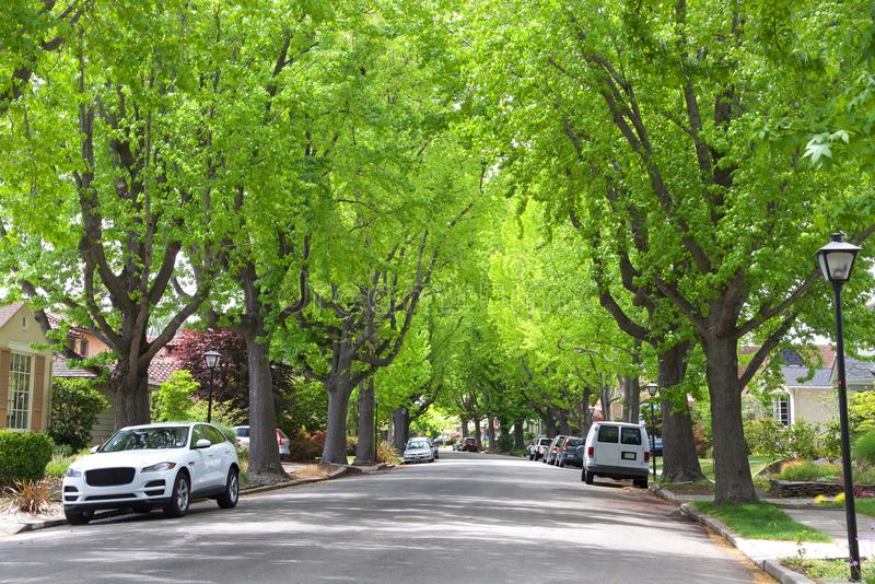 Tree lined neighborhood with lamp posts stock image