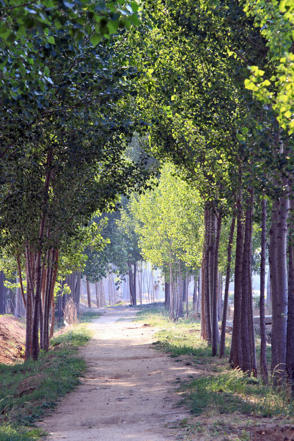 Download Tree lined path stock image. Image of pathway, green - 20263921