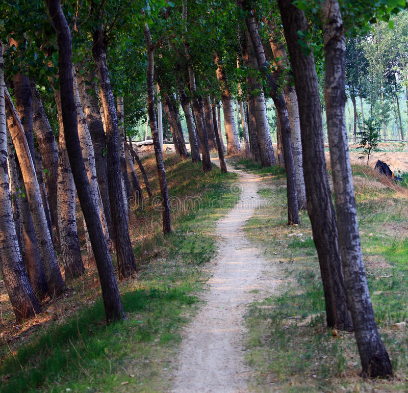 Download Tree lined path stock photo. Image of summer, hiking - 20453768