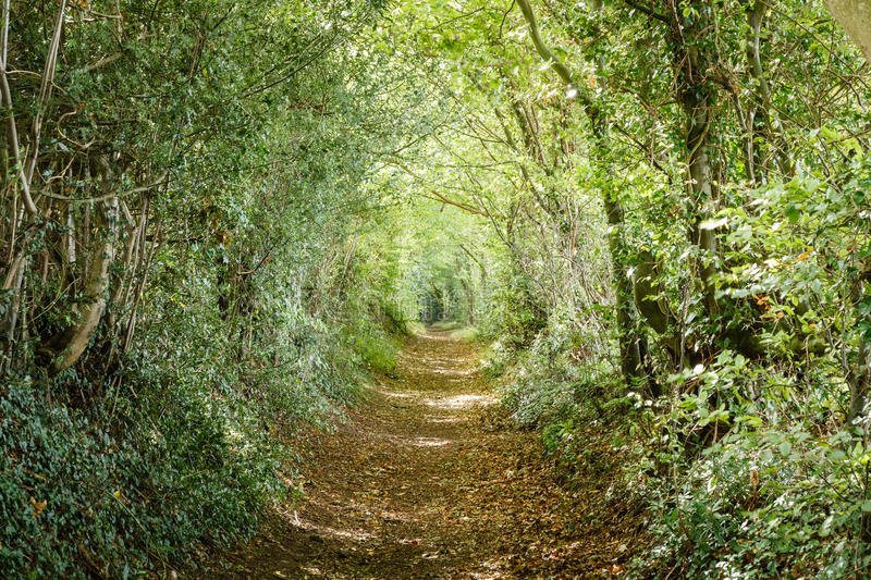 Tree Lined Path Royalty Free Stock Photography