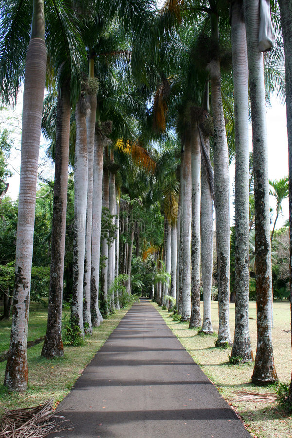 A tree lined path royalty free stock photos