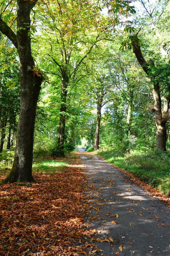 A tree lined pathway in the autumn woods. Covered in fallen leaves stock images