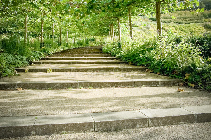 Tree lined pathway. Cascade of tree lined pathway steps through a formal garden stock images