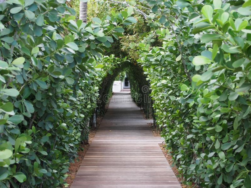 Tree Lined Pathway in Luxury Resort. A tree lined pathway through a tropical resort with arched bamboo and plants forming a canopy overhead stock photo
