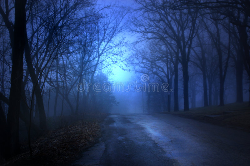 Tree Lined Road. Dark tree lined road, lit by eerie blue moonlight