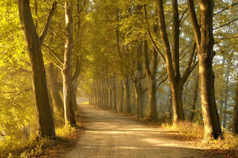 Tree lined road in autumn royalty free stock photos
