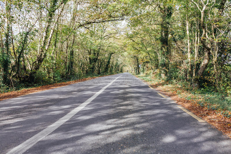 Tree-Lined Road stock photography
